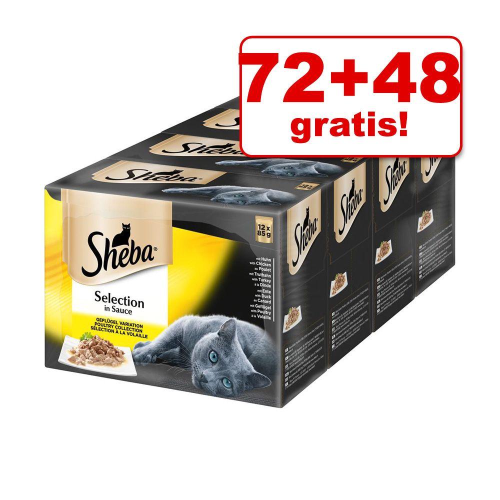 72 + 48 gratis! Sheba Sel