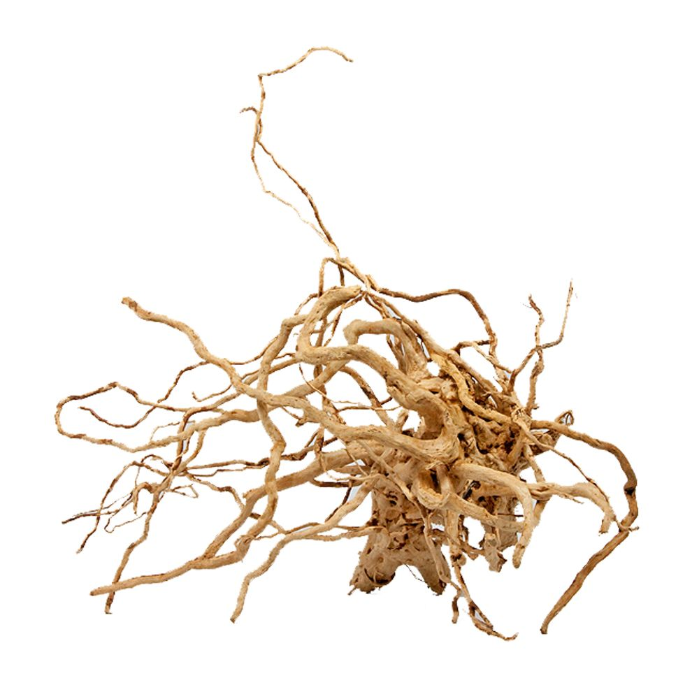 Red Root from the Moors Large - 1 root 41-60 cm