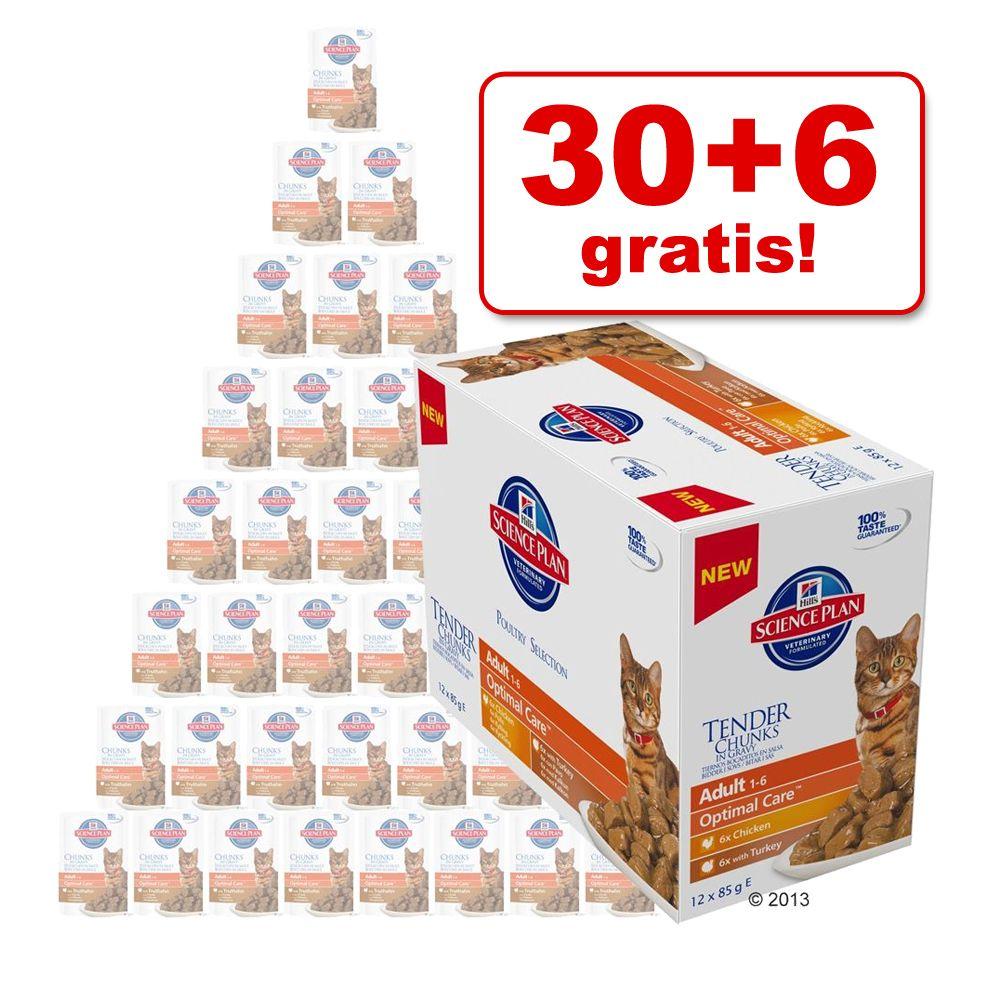 30 + 6 på köpet! 36 x 85 g Hill's Feline portionspåsar! – Adult Urinary & Hairball Control Chicken