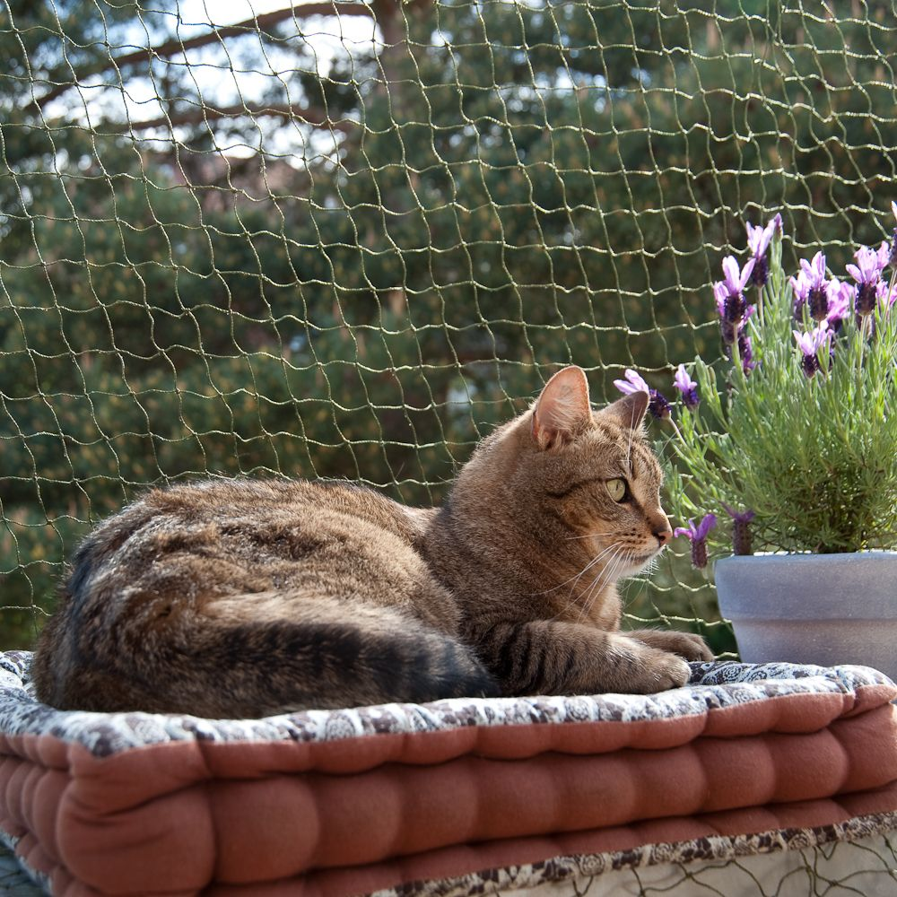 Wzmocniona siatka ochronna dla kota, oliwkowa - 2 x 3 m