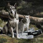 Manta de viaje Wolf of Wilderness para perros