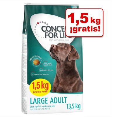 Concept for Life en oferta 12 kg + 1,5 kg ¡gratis! - Large Junior (12 + 1,5 kg)