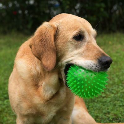Large Spiky Ball Dog Toy | Great deals at zooplus!